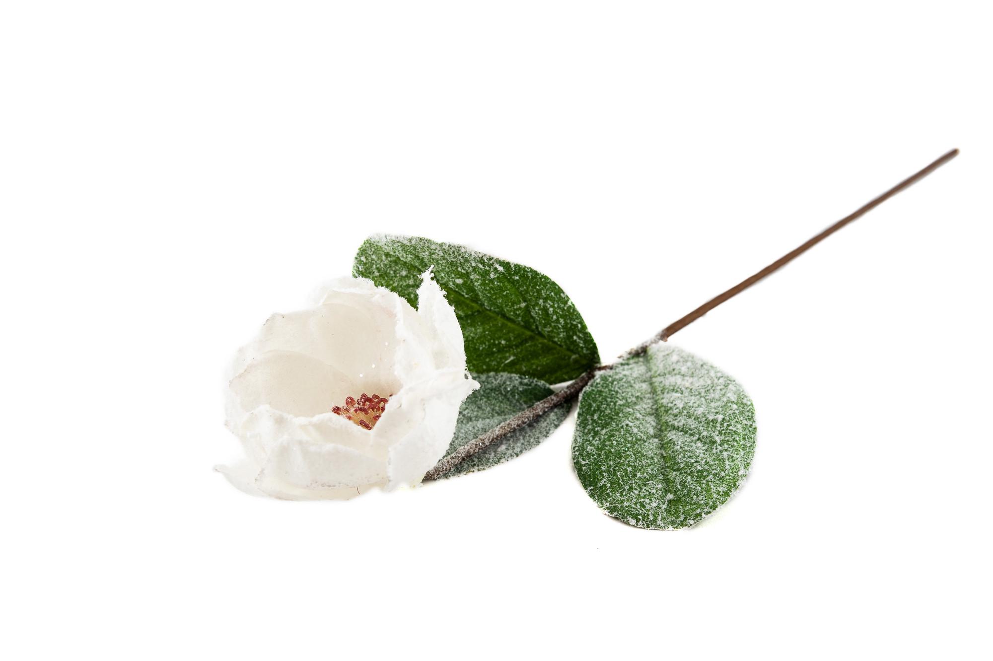 Magnolie, ojíněná