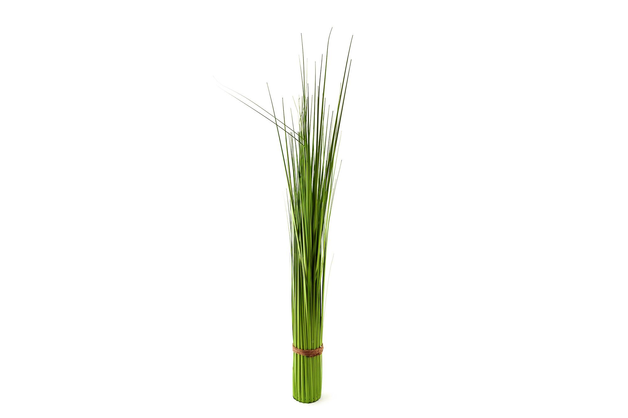 Ozdobná tráva 100 cm