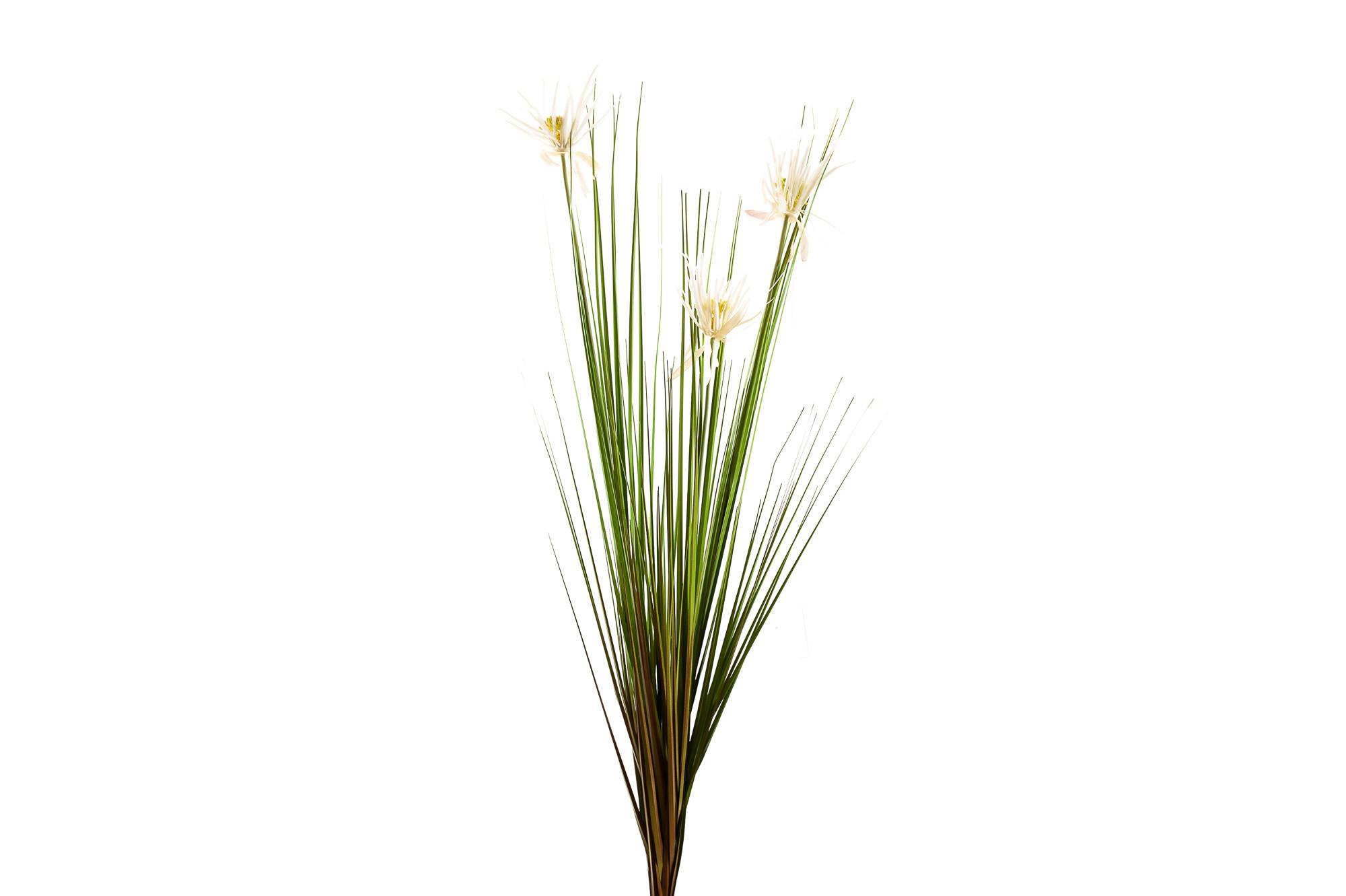 Ozdobná tráva 120 cm