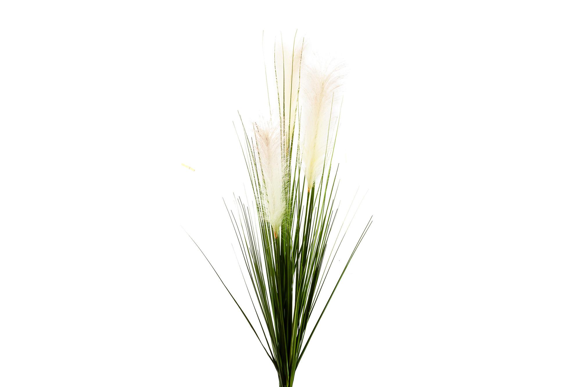 Ozdobná pampová tráva 120 cm