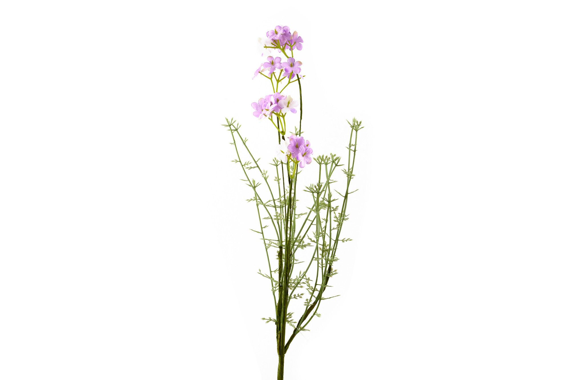 Verbena - lila