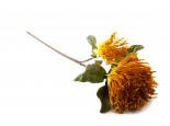 Chryzantéma, pěnová květina